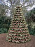 Live Christmas Tree i Bok tornträdgårdar Arkivbild