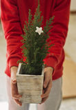 Live Christmas tree Stock Photography