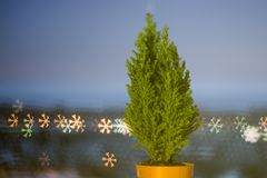 Live Christmas tree stands on the background of bokeh, for a small live Christmas tree, blurred background.Boke snowflakes stock photography