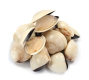 Live clam. A group of live clam on white Stock Images