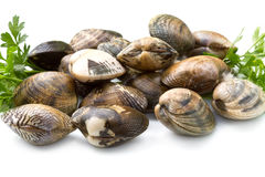 Live clams. In isolated white background Stock Image