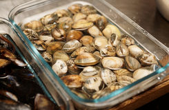 Live clams in water, close-up. Live clams in glass can immersed in water, close-up Stock Photography