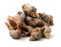 Live conch. On white background Royalty Free Stock Photos