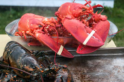 Live and Cooked Lobster. On Grand Manan New Brunswick Royalty Free Stock Photography