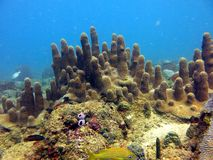 Live Coral Reef Royalty Free Stock Photos