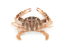 Live crab Stock Images