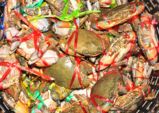 Live crab Royalty Free Stock Images