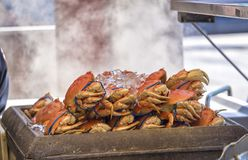 Live Crab being steamed for food royalty free stock image