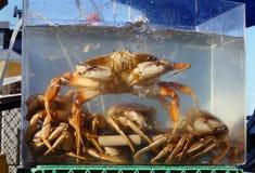 Live Crab für Verkauf lizenzfreies stockfoto