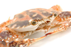 Live crab macro Stock Photo