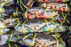 Live Crab for sale Stock Image