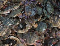 Live crab Royalty Free Stock Photos