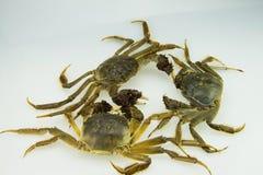 Live Crabs Stockbilder
