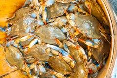 Live crabs, China town, New York city stock photo