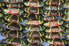Live crabs ready to be cooked in a market Stock Photos