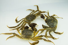 Live crabs Stock Images
