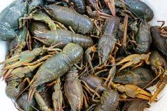 Live crayfish closeup Stock Photography