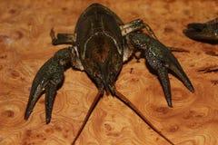 Live crayfish Stock Photos