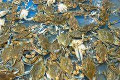 Live da la vuelta cangrejos en el supermercado en Houston, Tejas, los E.E.U.U. fotos de archivo libres de regalías