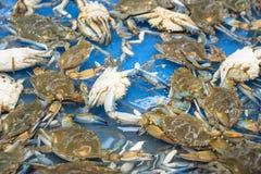Live da la vuelta cangrejos en el supermercado en Houston, Tejas, los E.E.U.U. fotografía de archivo
