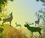 Live of deers  in forest Stock Image