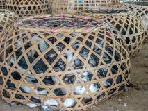 Live ducks and other birds. Laos food and livestock market stock photo