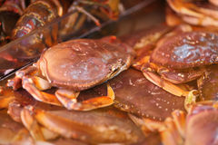 Live Dungeness Crab in Market Stock Images