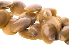 Live Edible Clams Macro Stock Images