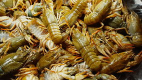 Live European river crayfish sold at the fish market. Macro shot stock footage