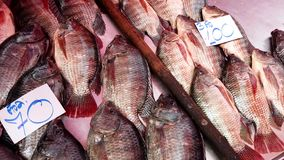 Live Fish Lie i torra Pan With Gills Working Waiting som ska säljs för matställe stock video