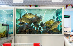 Live fish ready for sale in the hypermarket Royalty Free Stock Images