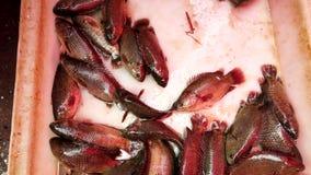 Live Fish Squirm och vridning i panna på marknaden stock video