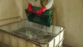 Live fish thrown away from the box. Hd stock video footage