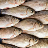 Live fish (carp). Fresh catch. The top view. Royalty Free Stock Photos