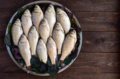 Live fish (carp), lined with on a tray on a dark wooden background. Fresh catch. Stock Image