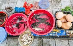 Live fishes and pumpkins on street outdoor market. YANGSHUO, CHINA - MARCH 30, 2017: live fishes and pumpkins on street outdoor market in Yangshuo in spring stock image