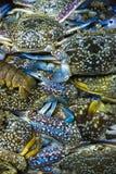 Flower crab Royalty Free Stock Photo