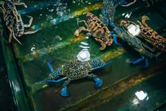 Live fresh blue crabs on shop counter. Close up Stock Photos