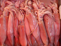 Live Freshly Caught Squid at Maltese Fish Market Stock Photos
