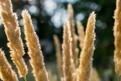 Live Golden-aren Natuurlijke achtergrond van vegetatie door de stralen van de zon Op de achtergrond de hemel en greens stock foto
