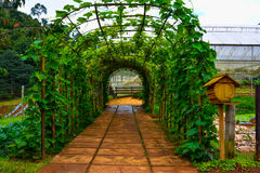 Live green tunnel made from with plants Stock Image