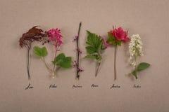 Live Herbarium auf Weinlese-Brown-Hintergrund lizenzfreie stockfotografie