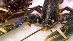 Live lobster on the ice market counter stock video