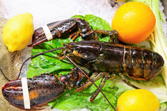 Live lobster on market display Stock Image