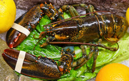 Live lobster on market display Stock Photo