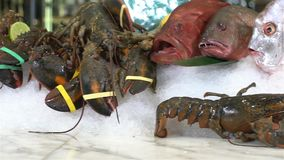 Live lobsters on a background of raw crabs and various fish on ice stock footage