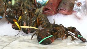Live lobsters on a background of raw crabs and various fish ice stock video footage