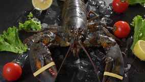 Live lobsters on a background of raw crabs and various fish on ice stock video footage