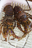 Live lobsters on the market Stock Photo