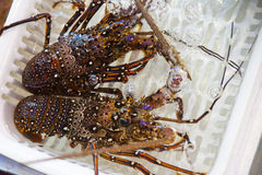 Live lobsters on the market Royalty Free Stock Photo